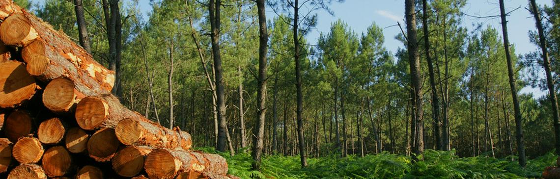 Ecoplan-Kammer-Wald-vor-Daten-nicht-sehen