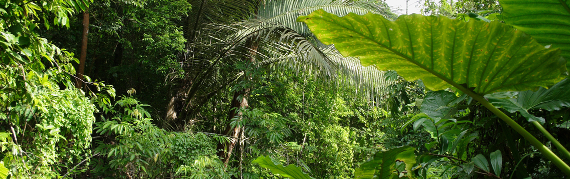 Ecoplan-Verbaende-Dschungel-Dezentrale-Datenhaltung